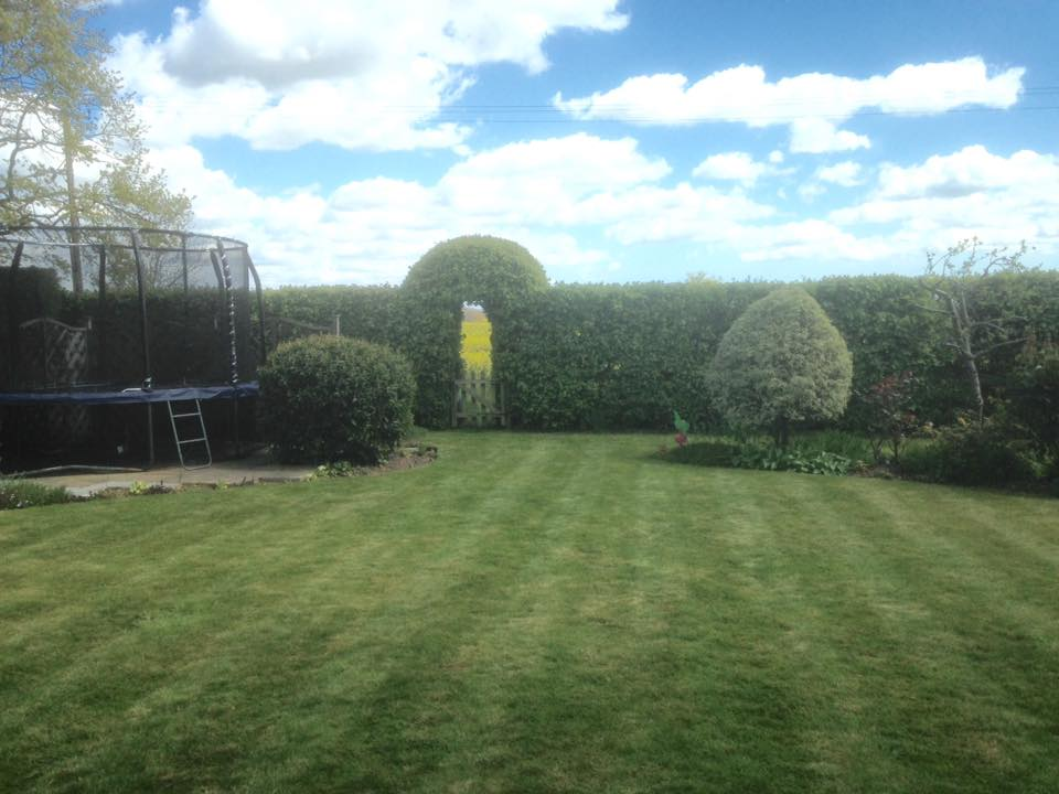Regular Maintenance and Hedge Shaping